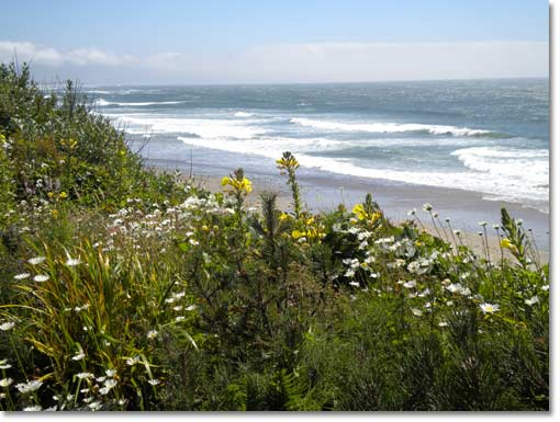 Oregon Coast beach view with flowers in the forefront.
